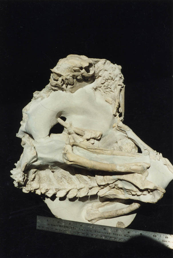 Poebrotherium (camel) Mother with baby