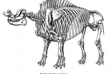 Titanothere (Herbivore) – Brontops
