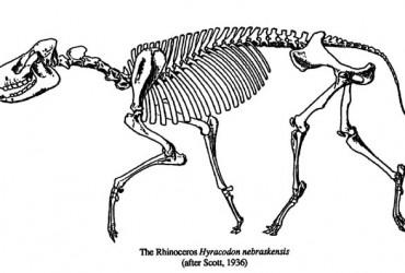 Rhino – Hyracodon